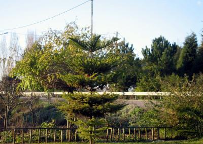 ventosadobairro-0132