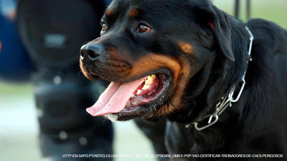 Formação de detentores de cães perigosos e potencialmente perigosos